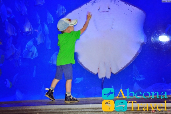 аквариум-абеонатравел