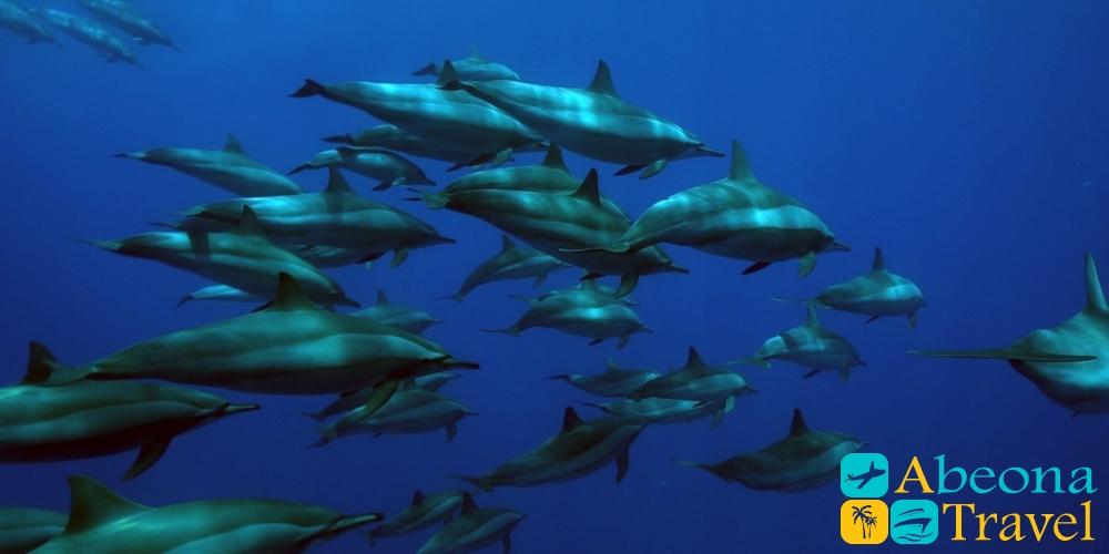 дайвинг_с_дельфинами дельфины-абеонатравел