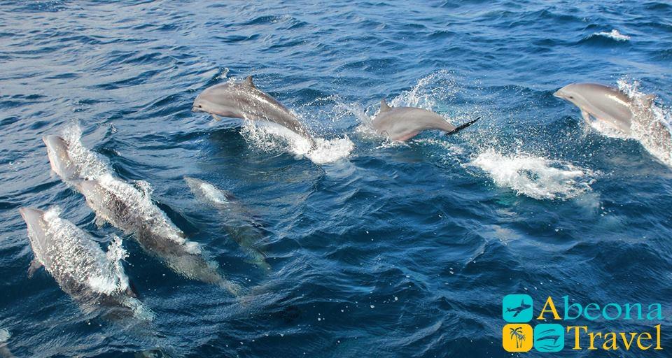 дельфины-в море абеонатравел