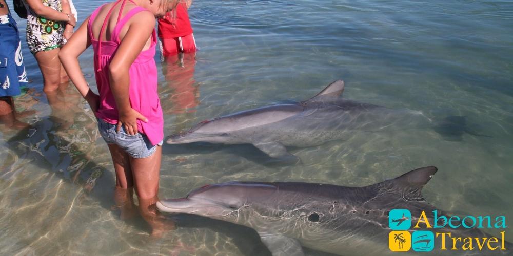 დელფინების სახლი