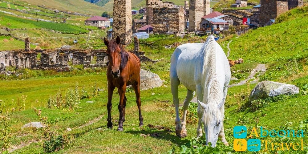 Экскурсия в Сванети из Тбилиси